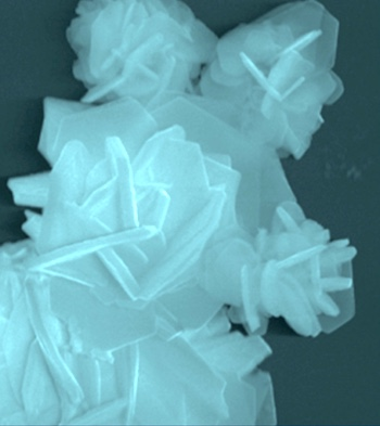 A scanning electron microscope image shows a flake of the two-dimensional electrocatalyst developed at Rice University. The material made of a transition metal and sulfur proved able to extract hydrogen from water with high performance and low cost.
