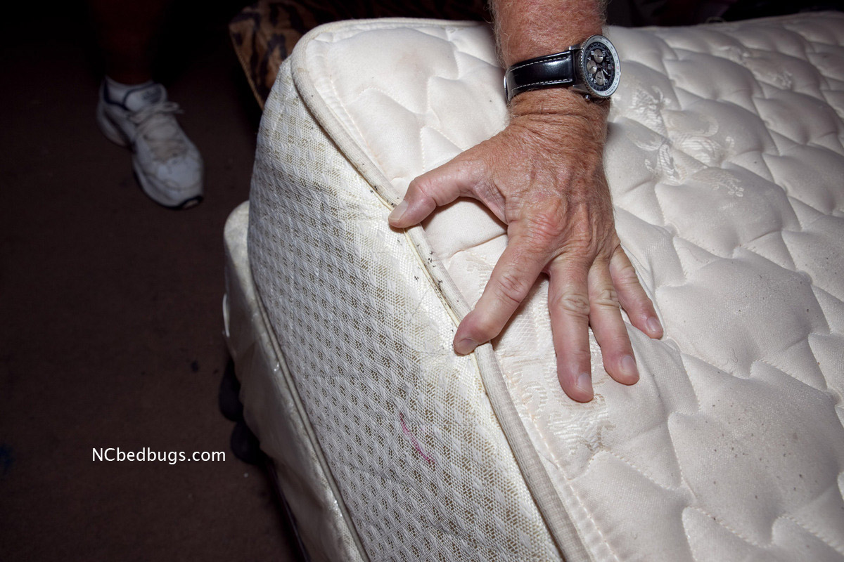 Kill Bed Bugs In A Mattress