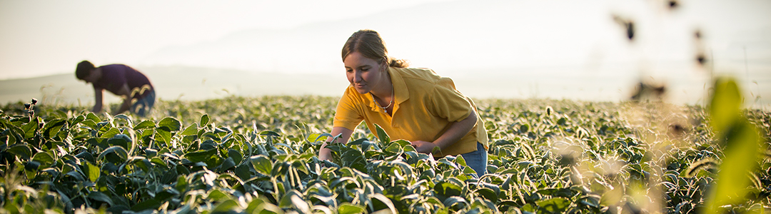 Students examine plants in a field of corn.