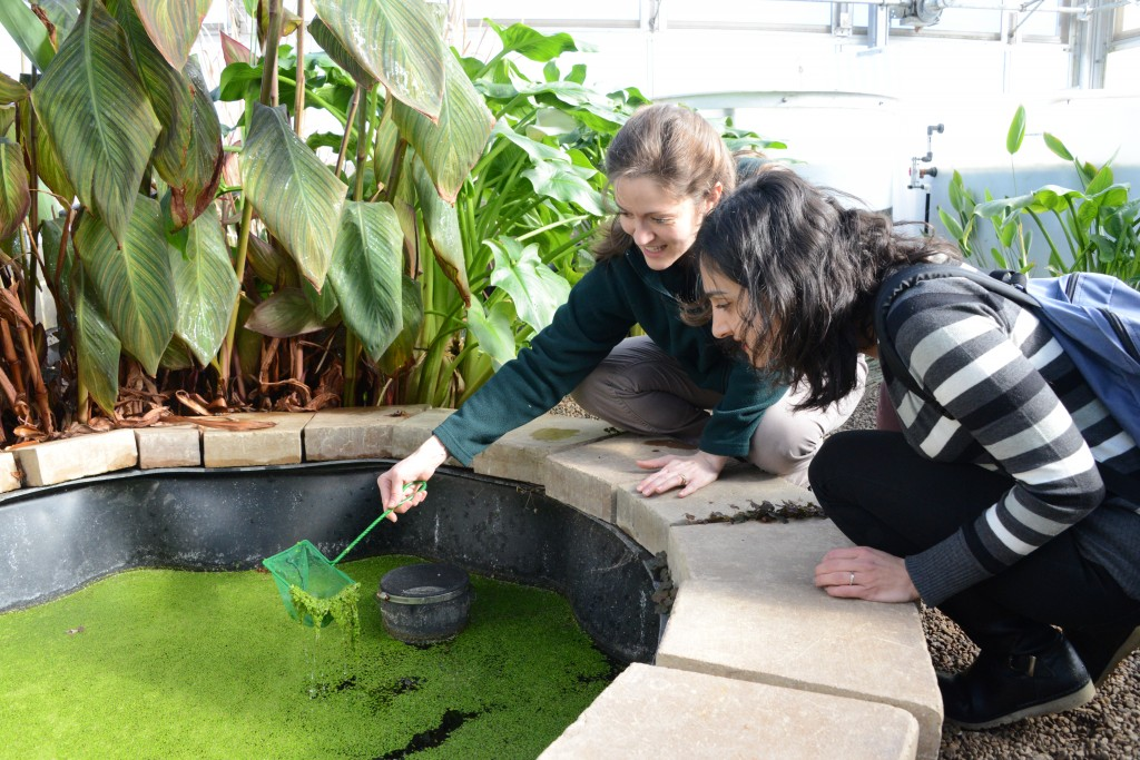 Rachel Brennan, associate professor of civil and environmental engineering, back, shows Ozgul Calicioglu, a new doctoral student in her research group, how to clear out the duckweed in one of the Eco-Machine's ponds.