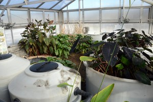Only a handful of plants occupy the 540-square-foot facility during the winter. Once spring arrives, the Eco-Machine will be teeming with more life.