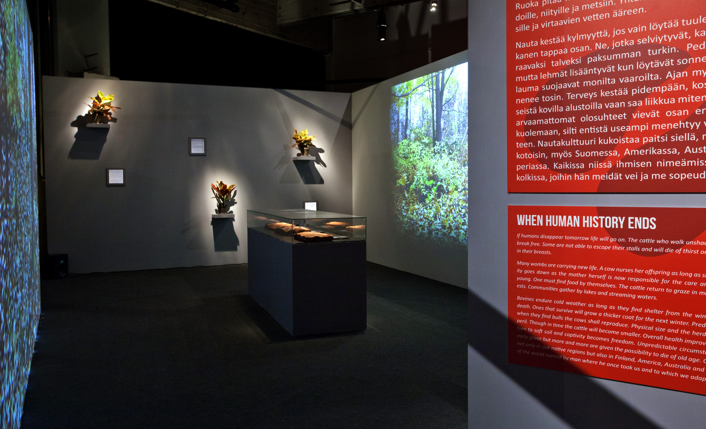 Haapoja-History of Others_The Museum of the History of Cattle_installation view_Time before history