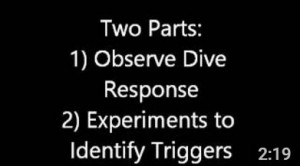 Fellow Vikram Baliga produced this video to accompany his Dive Response module for inquiry-based education in high school science lab.