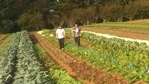students doing research at the UCSC farm