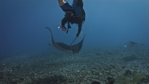 Camrin Braun (WHOI) tags a manta ray in the Phoenix Islands (Photo