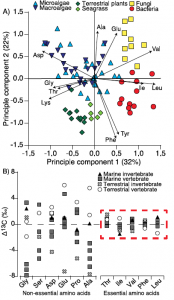 A) Amino acid fingerprinting, via PCA, showing separation of phylogenetic groups based on normalized essential amino acid d13C values (Larsen, et al. 2013) and B) amino acid d13C change with trophic transfer (D13C) showing high variability across non-essential amino acids but little to no fractionation for essential amino acids across a range of marine and terrestrial invertebrate and vertebrate consumers (modified from McMahon et al. 2013).